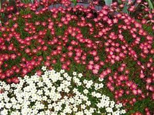 Blumen Für Steingarten : blumen steingarten 5 news von b rgerreportern zum thema ~ Markanthonyermac.com Haus und Dekorationen
