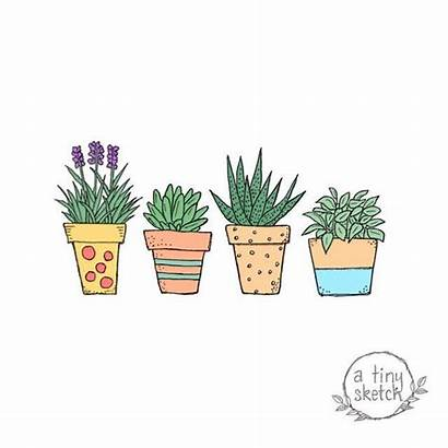 Potted Plant Clipart Drawn Hand Backgrounds Plants