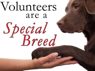 vols animal volunteers needed read how you benefit too spca hastings and districts