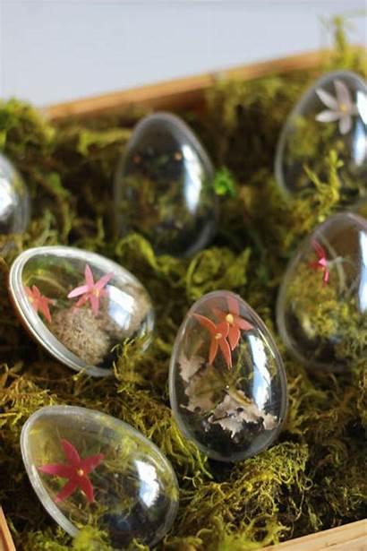 Easter Decorations Egg Shaped Terrariums Arrow Miniature