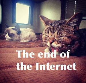Lil Bub meets Grumpy Cat: The Internet can end now | PCWorld