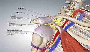 Thoracic Outlet Syndrome  U2013 Remedial Massage Can Help