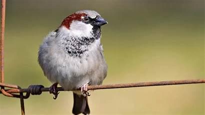 Wire Bird Sparrow Sitting Birds Indian Wallpapers