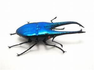 Blue Beetle Insect | www.pixshark.com - Images Galleries ...