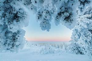 Lapland Winter Pictures - Rayann Elzein Photography