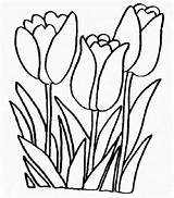 Tulip Coloring Tulips Flower Pages Peony Printable Line Field Flowers Colouring Single Template Bouquet Getcoloringpages Clipartmag sketch template