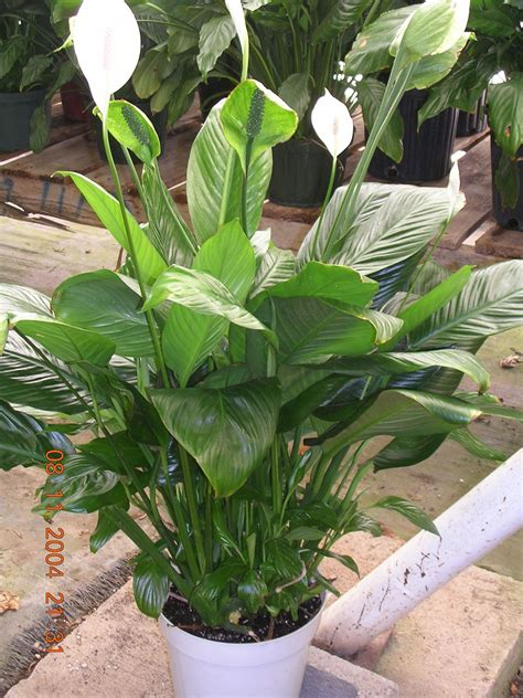 Pictures And Names Of Tropical House Plants