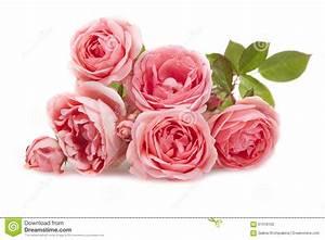 Bouton De Rose : blanc rose de bouton de rose de fleur de fond image stock ~ Dode.kayakingforconservation.com Idées de Décoration