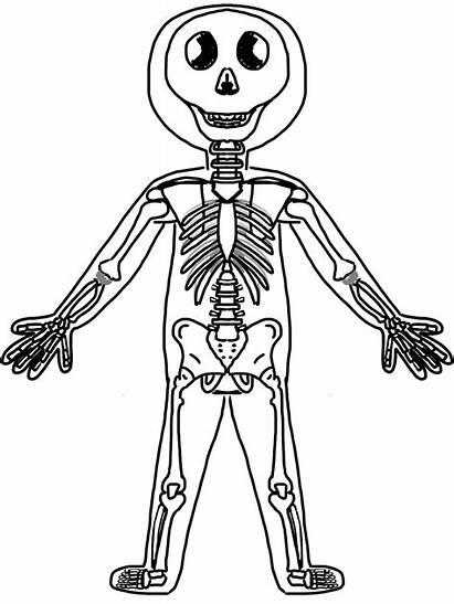 Human System Skeleton Clipart Skeletal Clip Coloring