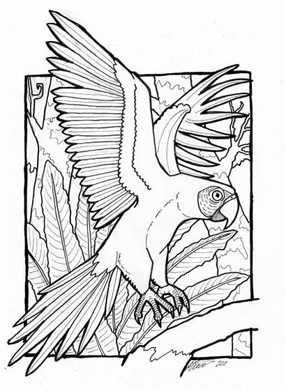 Coloring Macaw African Birds Adult Papagei Bird
