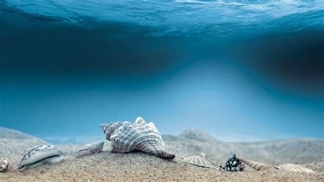 choisir pc de bureau fond d 39 écran hd paysage sous marin coquillage image