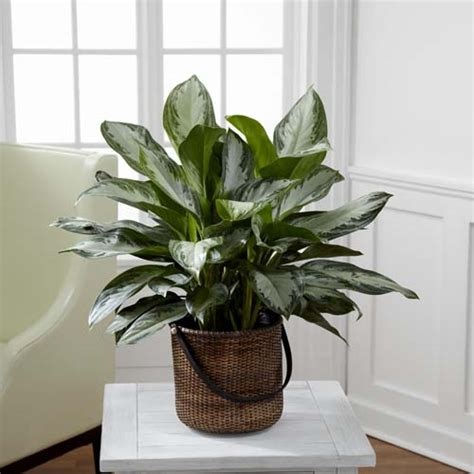 Best Indoor Window Plants by Best Indoor Plants According To Different Light Conditions