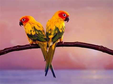Cell Phone Wallpapers Beautiful Birds Wallpapers