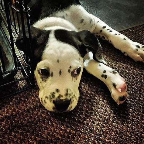 crossbreed dogs        mutt