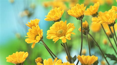 with yellow flowers 1920x1080 yellow flowers desktop pc and mac wallpaper