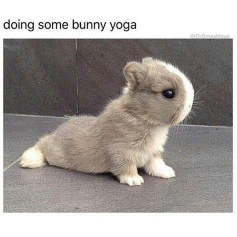 Chocolate Bunny Meme - chocolate bunny meme 28 images happy easter meme 2017 download happy easter meme 2017 the
