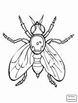 Coloring Fly Pages Fruit Firefly Insect Drawing Printable Guy Flies Supercoloring Getdrawings Fireflies Insects Animals Clipart Getcolorings Results Searches Recent sketch template