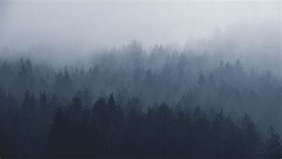 Desktop Unsplash Wallpapers Forest Gradient Stunning Distance
