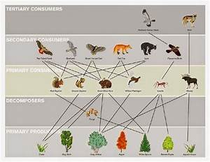 Rm 31 Corp  Food Webs Of Interest