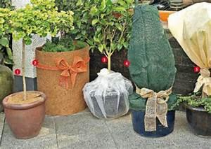 Winterschutz Für Kübelpflanzen : winterschutz f r topf und k belpflanzen von penny markt ansehen ~ Avissmed.com Haus und Dekorationen