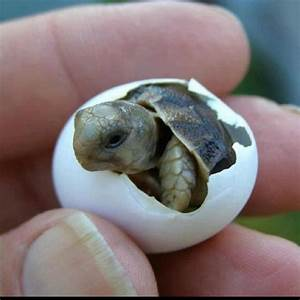 Cutest thing! :) | Fish, frogs, turtles, lizards, snakes ...