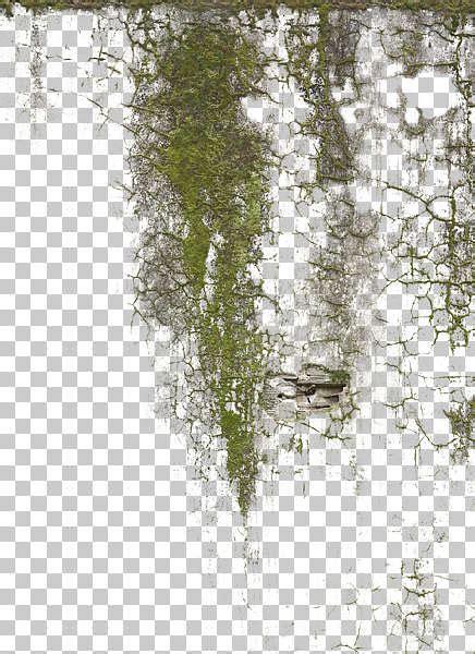decalleakingmossy  background texture stain