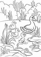 Duck Pond Coloring Pages Little Ducklings Lake Cute Drawing Swim Three Water Kind Quacking Illustrations Happy Getdrawings Vector sketch template