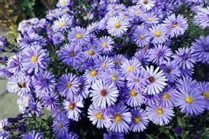 Winterharte Blumen Für Den Garten : winterharte pflanzen f r balkon und garten ~ Whattoseeinmadrid.com Haus und Dekorationen