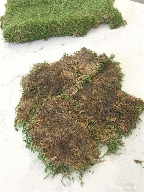how to grow sheet moss diy kokedama japanese moss ball planters sand and sisal