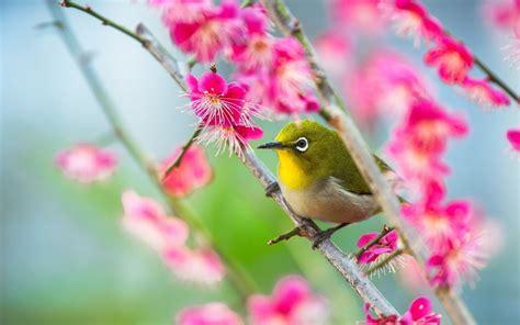 bird hd wallpaper background image  id