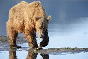 Utterly Incredible Facts About The Hibernation Of Bears
