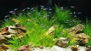 Freshwater Fish Breeds For Your Aquarium