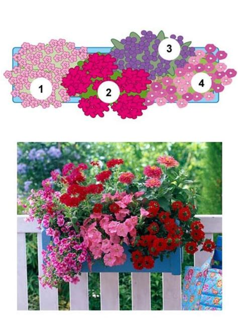 Blumenkästen Bepflanzen Ideen by Balkonblumen Fantasievoll Kombiniert Terrasse Balkon