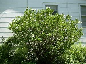 Que Planter En Juin : quels sont les arbustes planter en juin ~ Melissatoandfro.com Idées de Décoration