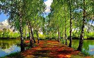 Cool Nature Desktop Backgrounds Spring