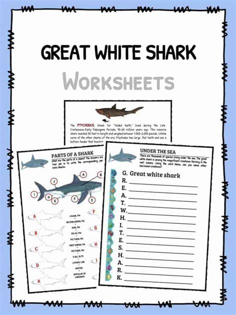 Great White Shark Worksheets