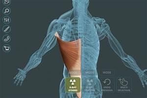 Visual Anatomy 3d  U2013 Human