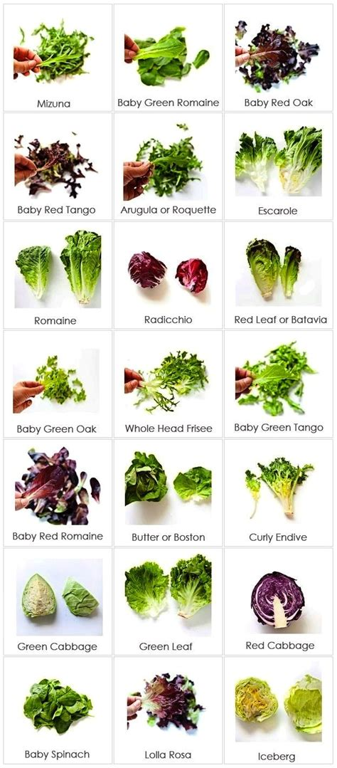 Types Of Salad Greens  Shivesh's Kitchen