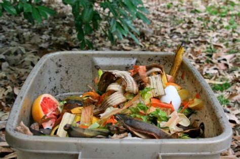 compost cuisine how to start an odor free freezer compost bin as a city or small space dweller inhabitat