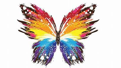 Butterfly Colorful Abstract Wallpapers Creative Backgrounds 4k