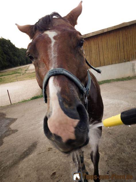 pferden den sommer erleichtern tipps zum pferd