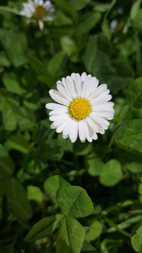 fotos gratis naturaleza campo petalo verde botanica