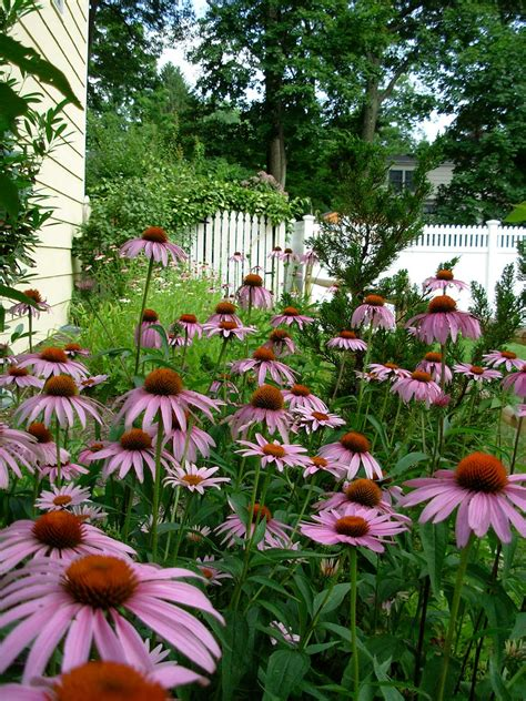 how to start a butterfly garden american butterfly