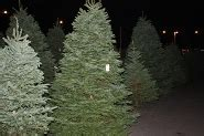 sacramento christmas tree lot snow flocking available