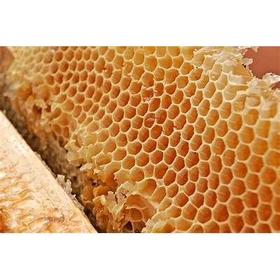 Download Honeycomb Wallpaper 1600x1067Wallpoper #305694