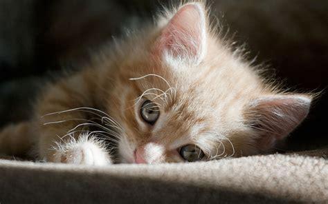 kitty wallpapers hd desktop wallpapers  hd