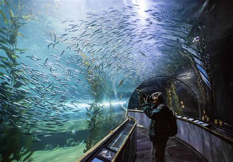 aquarium of the bay underwater tunnel san francisco ca photograph by rondinelli