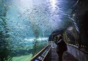 Aquarium Of The Bay Underwater Tunnel - San Francisco, Ca ...