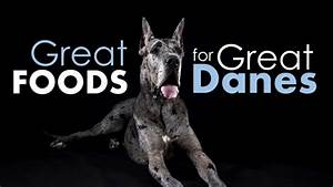 The best dog food for great danes 4 owner approved choices for Great dane dog food