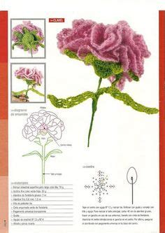 Carnation Anatomy Diagram by Carnation Diagram Related Keywords Suggestions